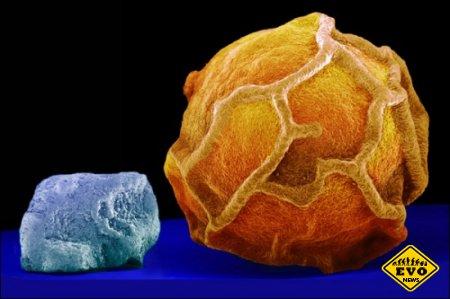 Частица соли и перца (Интересная картинка)