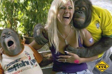 Прикольные картинки с обезьянами пристающими к девушке