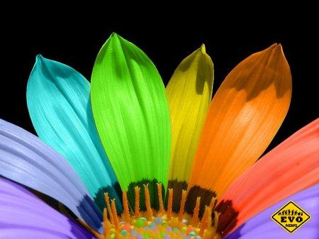 Онлайн тест на цвета (Узнай новенькое о себе)