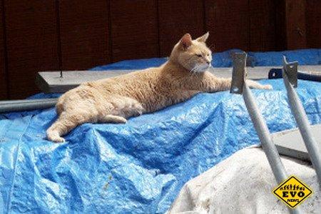 Кот занимает пост мэра в небольшого городка на Аляске