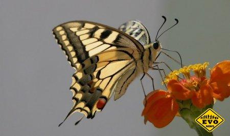 Эффект бабочки и что это значит (Интересная статья)