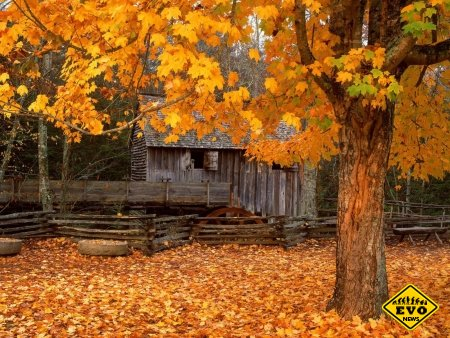 Почему желтеют листья осенью? (Это следует знать)