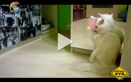 Прикольное видео о Коте борящегося со стикером