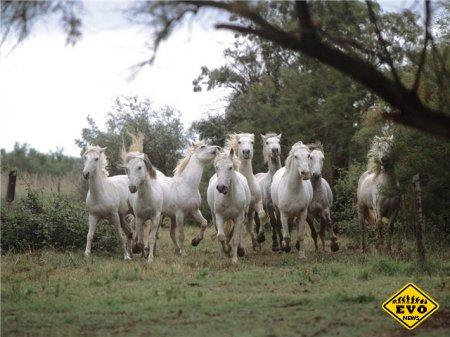 Интересные факты о лошадях с фото (2012)