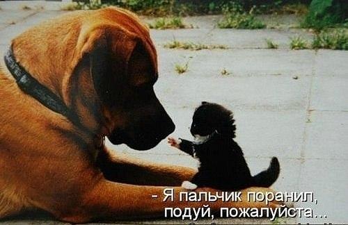 Ржачные картинки для поднятия настроя)