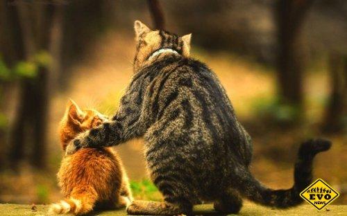 Счастье рядом - интересная история о мудром коте