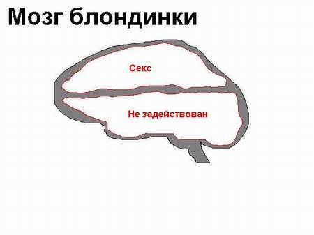 20 отличий мозга мужчин от мозга женщин (Факты)