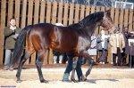 Самые дорогие лошади в мире (Топ 10)