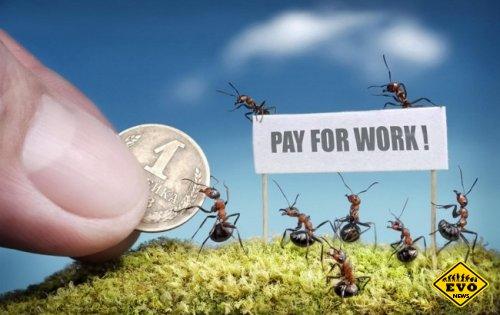 10 снимков из жизнь муравьев (Интересные фото)