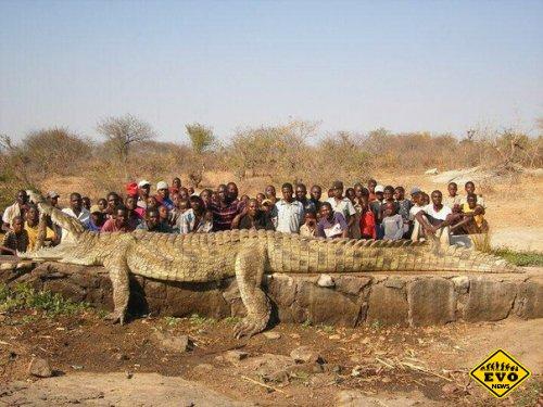 Самого большого крокодила поймали в республике Бурунди