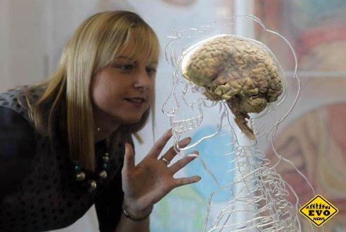 Человечий мозг неподвластен дряхлению