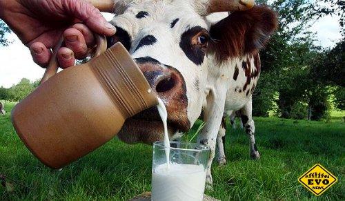 Немного интересных фактов о молоке!