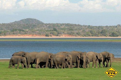 Индийские слоны отдыхают в летнем лагере
