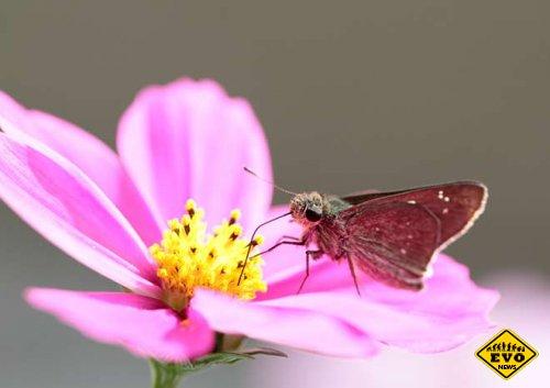 Бабочки-мутанты из зоны атомной станции Фукусима
