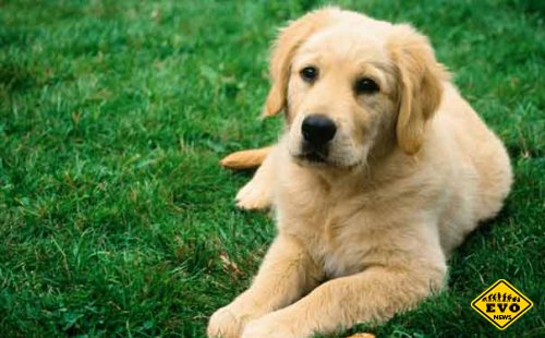 Пса не пустили на похороны хозяина