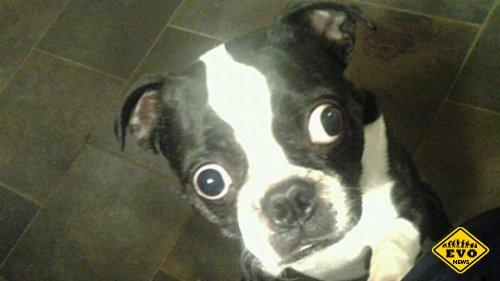 Рекорд в категории «самые большие собачьи глаза»