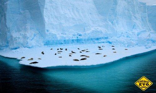 Поиск жизни подо льдами Антарктиды