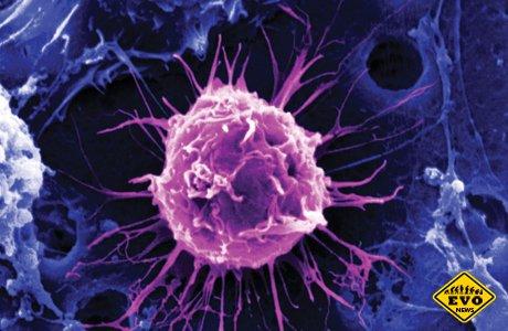 Ученые способны восстанавливать даже нервные клетки