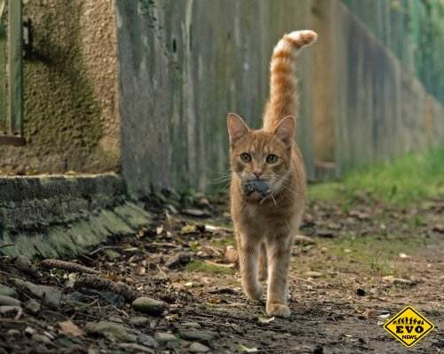 Современные кошки по размерам больше древних лошадей