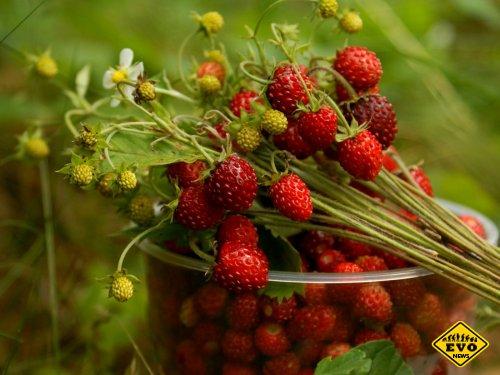 Смартфоны смогут определять спелость овощей и фруктов