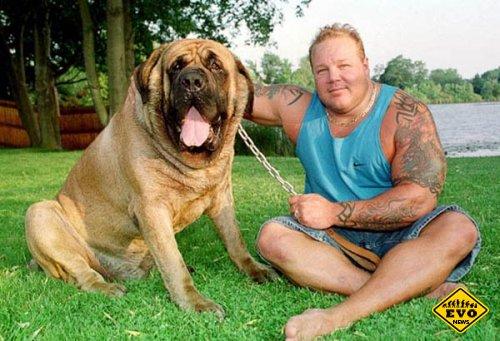 Произошла смена рекордсмена у самых крупных в мире собак
