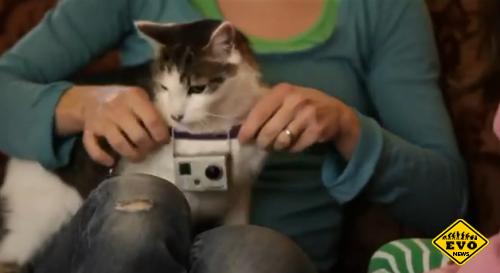 Котопрогулка - интересное видео жизнь котов