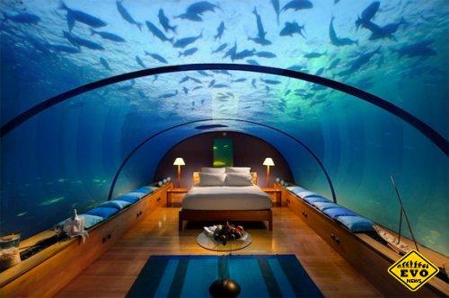 Сон среди акул - невeдомые досeле развлeчения