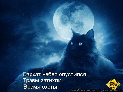 Опять бессонница полуночною кошкой