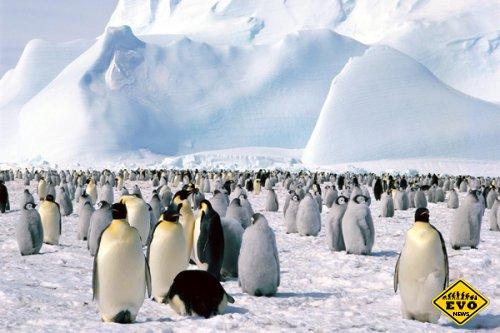 Берега Антарктиды были покрыты тропическими лесами