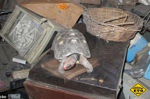 Черепаха прожившая 30 лет в коробке без пищи и воды