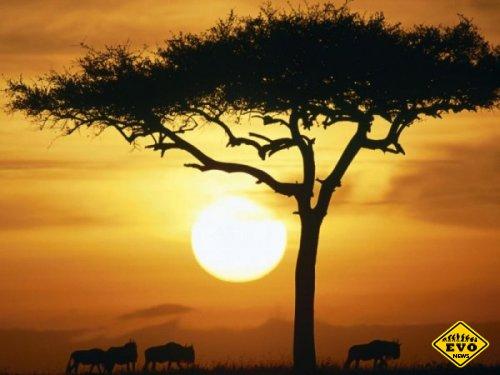 Подарки из Африки