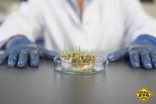 Вырастили растения из семян, возрастом в 30 тысяч лет