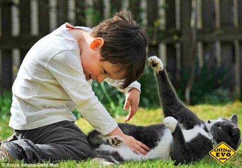 Бездомный кот помог больному мальчику