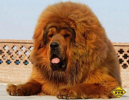 Собака - дороже бриллиантов!