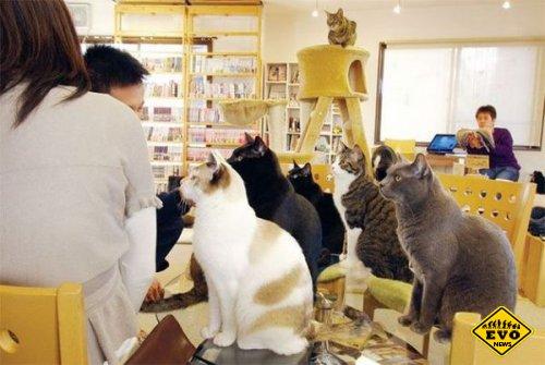 Новый закон будет заботиться о здоровье японских кошек и собак