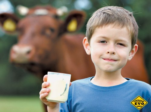 Запах чеснока нейтрализует жирное молоко