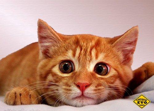 Рыжий кот Орландо выдает точные инвестиционные прогнозы