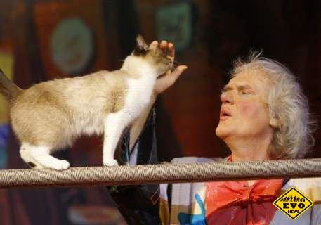 В Москве открылся «Храм кошек»