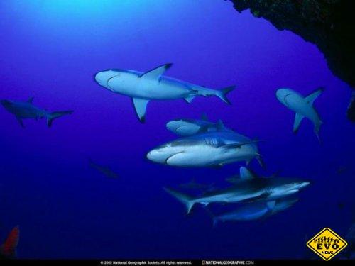 Биологи доказали наличие социальных связей у акул