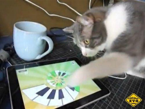 Выпущен кошачий комплект видеоигр для планшетов