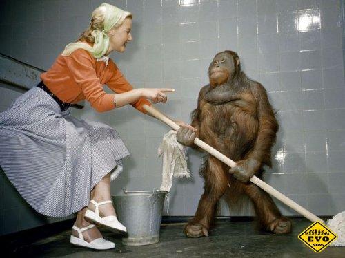 Наблюдали за превращением обезьян в человека