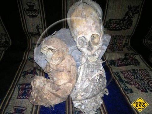 В Перу нашли мумию пришельца с головой в полметра