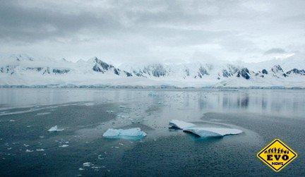 Подо льдом в Антарктиде «бушует жизнь»