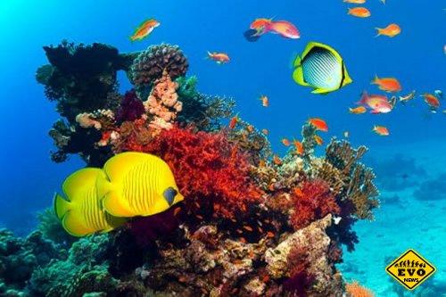 Самый крупный в мире морской заповедник будет располагаться в Австралии
