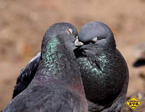 Странные сексуальные привычки у некоторых животных