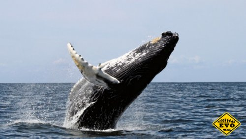 Самоубийства китов