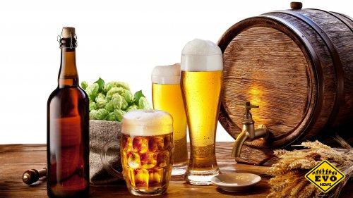 Польза пива и способы применения в бытовых условиях