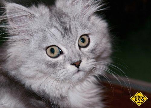 Почему кошка должна заходить первой в дом?