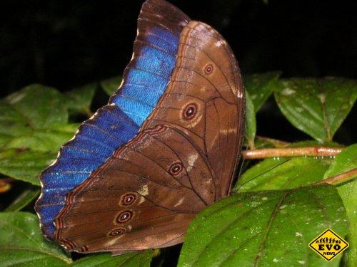 Пагубная страсть бабочек (Статья)