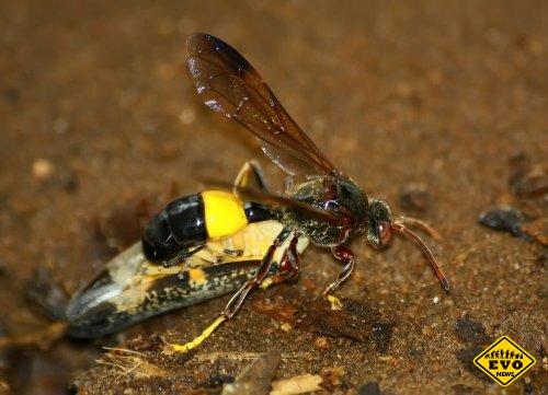 Вирусы и осы (Интересная статья)